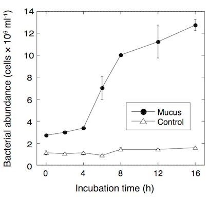 Development of bacterial abundance in seawater after addition of coral mucus