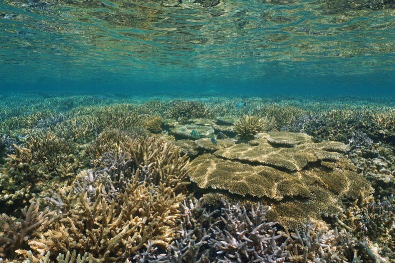 Zooplankton community changes over monsoons in a Malaysian coral reef