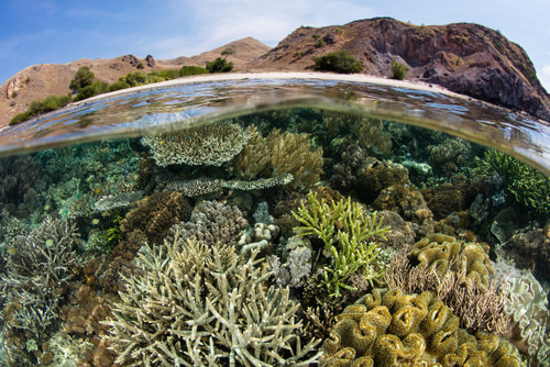 Sea-surface microlayer is rich in microbes over coral reefs